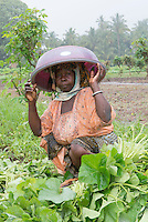 BRAC PROJECT, Agricultural project in Fungafunga, Morogoro, women working in kitchen garden fields to sell vegetables in the local market. Rehema Aux keeps her head dry from the rain with a bucket. Morogoro, Tanzania, Africa.