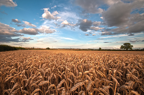Field in Cropwell Bishop, near Nottingham. Shot on summers evening.