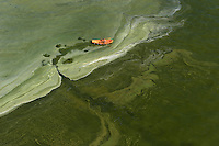 A man rows his dingy through thick green algae blooming in the Gulf of Gdansk.