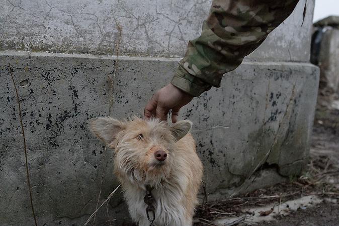 Patron ist ein streunender Hund den die Einheit angelockt und angebunden hat. Der Gedanke ist die Sinne und das Bellen des Hundes als Artillerie Vorwarnung zu nutzen.