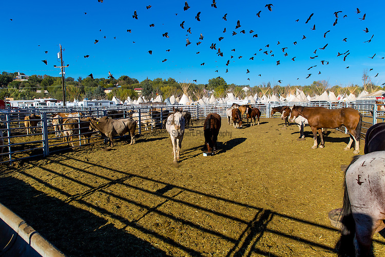 The rough stock pens at The Pendleton Round Up, Pendleton, Oregon, USA