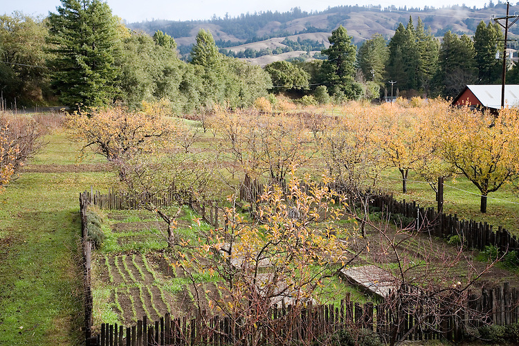The Apple Farm in Mendocino County's Anderson Valley is a center for fine cooking classes run by Don and Sally Schmidt