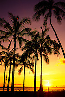 Colourful sunset behind palm trees at Waikiki beach park