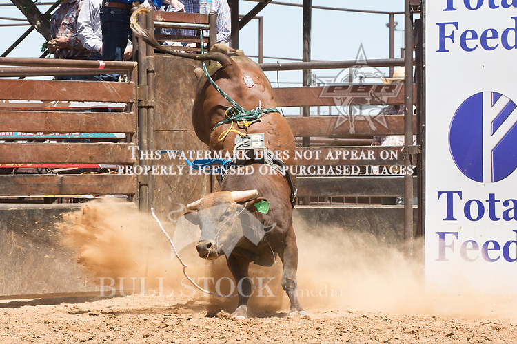 508C Sober Enough from Mark & Dorine Ireland during the AHW Futurity at the 2017 ABBI American Heritage West, Los Lunas, NM. Photo Andre Silva