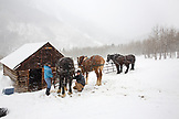 USA, Colorado, Aspen, wranglers get horses ready for the sleigh ride at the Pine Creek Cookhouse, Ashcroft