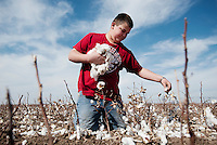 Zane Patterson (cq, age 12) has fun picking old cotton from his families cotton farm near Spearman, Texas, Tuesday, February 15, 2011. With the high price of cotton in recent years, many farmers in the area have switched to start farming cotton...Photo by Matt Nager