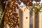October 24, 2016; Falling leaf (Photo by Matt Cashore/University of Notre Dame)