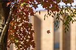 MC 10.24.16 Falling Leaf.JPG by Matt Cashore/University of Notre Dame