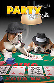 Samantha, ANIMALS, REALISTISCHE TIERE, ANIMALES REALISTICOS, funny, photos+++++The Poker Game master,AUKP61,#a#