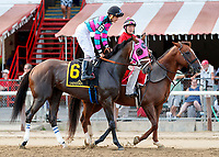 Classy Act in the post parade as Dream Tree (no. 8) wins the Prioress Stakes (Grade 2), Sep. 2, 2018 at the Saratoga Race Course, Saratoga Springs, NY.  Ridden by Mike Smith, and trained by Bob Baffert, Dream Tree finished 4 1/4 lengths in front of Mia Mischief (No. 4).  (Bruce Dudek/Eclipse Sportswire)