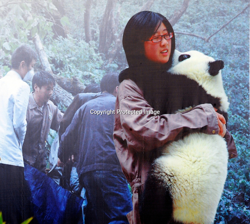 Panda Cui Cui appears with her keeper on a poster outside Beijing Zoo, 14th August 2008.   Cui Cui spent hours  terrified in a tree and had to be rescued by several People at the panda reserve. Eight tramatised one and two year-old  pandas, including Cui Cui were brought from Wolong to Beijing for recuperation and have been placed in aan Olympic Panda exhibition at Beijing zoo and are recieving unprecadented number of visitors.  The pandas were so scaerd during the quake and refused to come down from the trees. The Wolong keepers that accompanied the pandas to Beijing cuddle and play with pandas to help them recover from their horrific experience. <br />