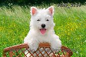 Marek, ANIMALS, REALISTISCHE TIERE, ANIMALES REALISTICOS, dogs, photos+++++,PLMP3194,#a#, EVERYDAY