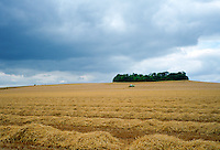 A combine harvester at work in a cornfield in Cambridgeshire, England at harvest time