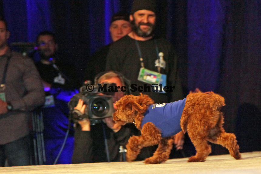 Katy Perry's Hund Butters - Entertainment Pressekonferenz, Convention Center Phoenix