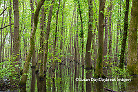 63895-15013 Swamp along Snake Road LaRue Pine Hills Otter Pond Natural Area Shawnee National Forest Union Co. IL