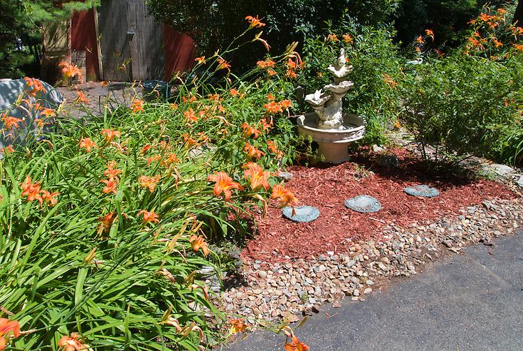 Hemerocallis fulva, orange daylilies daylily perennial blooming in summer