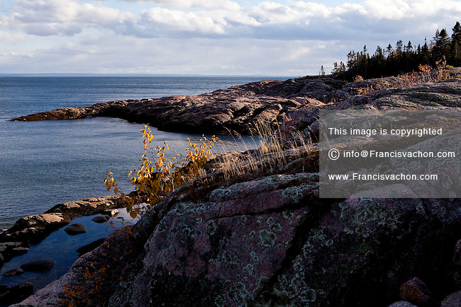 Crustose lichens are pictured on a rock in the St. Lawrence seashore of Essipit in the Quebec region of Cote-Nord, Thursday October 11, 2012. Lichens are composite organisms consisting of a symbiotic relationship between a fungus (the mycobiont) and a photosynthetic partner.