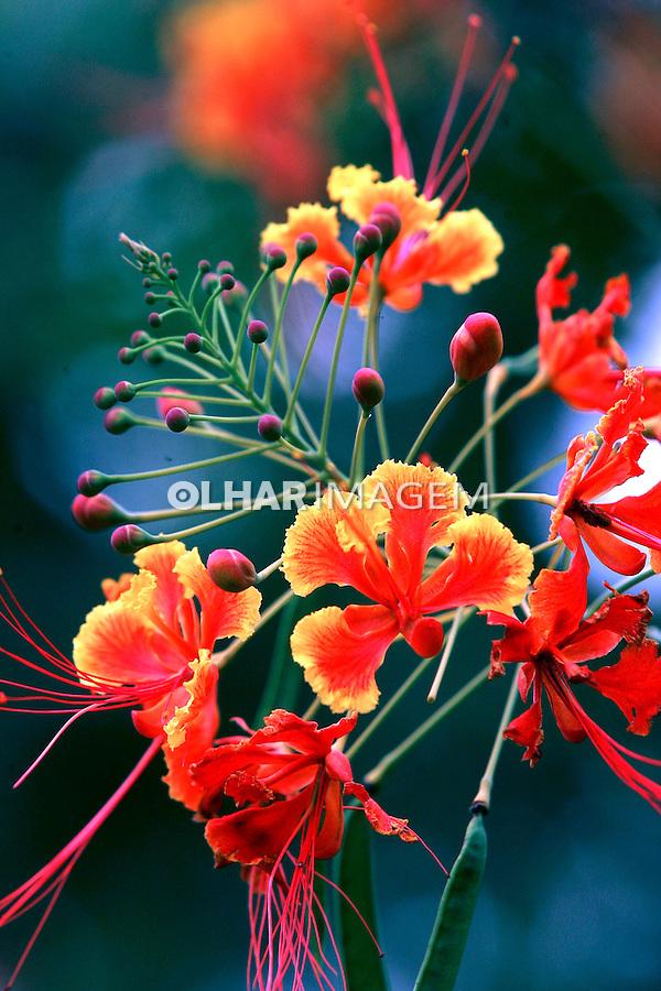 Flores do Cerrado. GO. Foto de Caetano Barreira.
