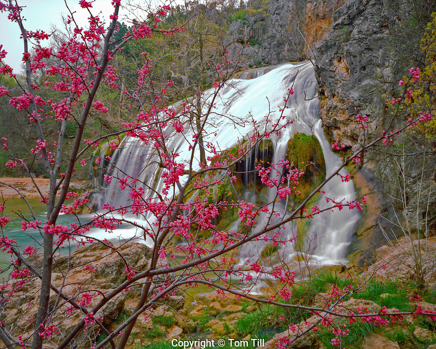 Turner Falls & Spring Redbud Blossoms, Arbuckle Mountains, Oklahoma     Cercis candemsis