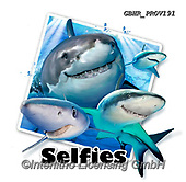 Howard, SELFIES, paintings+++++,GBHRPROV191,#Selfies#, EVERYDAY ,sharks,maritime