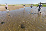 Mary, Judith, Diane & Bob On Horseshoe Crab Survey