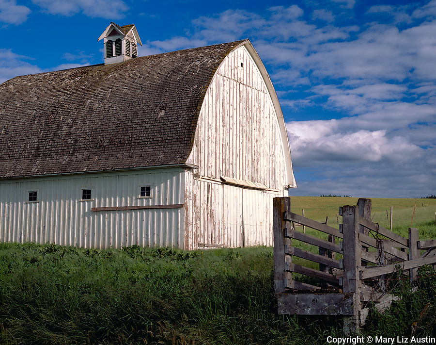 Latah County, ID<br /> Weathered round roofed white barn with adjacent wooden cattle chute, near Potlatch
