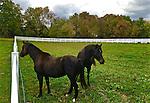 Hummelstown, Dauphin Co., PA, rural horse farm