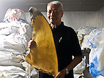 Shark fins street and warehouse in Hong Kong - Des Voeux Road Wes, Whale shark fins in Hong Kong, Indonesia ; Rhincodon typus; slow-moving filter feeding shark; the largest living fish species; Nabire; West Papua; whale shark; whale shark fins fetch the highest price in the trade; Hong Kong