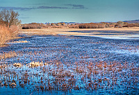 Bosque del Apache National Wildlife Refuge in New Mexico.