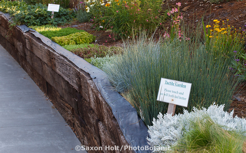 Therapeutic tactile garden for easy access with Community Garden of Healdsburg Senior Living Center, California