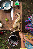 Eva and Gaby pluck and prepare the chicken for Lunch at Taller la Campesina run by the Embajadoras del Cacao, a cacao plantation and chocolate factory. Tecolutilla, Tabasco, Mexico