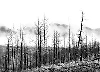 The gross heathenism of civilization has generally destroyed nature, and poetry, and all that is spiritual.<br /> - John Muir<br /> <br /> Hayman Fire burn area; 4 years later. Colorado