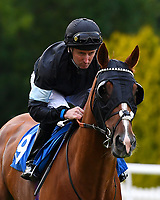 Zoffanist ridden by Martin Dwyer goes down to the start during Ladies Evening Racing at Salisbury Racecourse on 15th July 2017