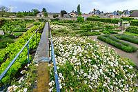 France, Loiret ('(), La Bussière, jardin du château de la Bussière, le potager, et sa vieille serre couverte de vigne et rosiers liane (cv. inconnus)
