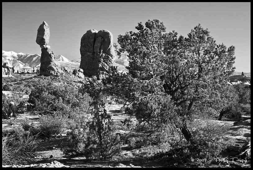 Balanced Rock and Junipers<br /> Arches National Park, Utah