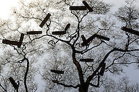 ETHIOPIA, Southern Nations, Lower Omo valley, beehives in tree  / AETHIOPIEN, Omo Tal, Bienenstoecke im Baum