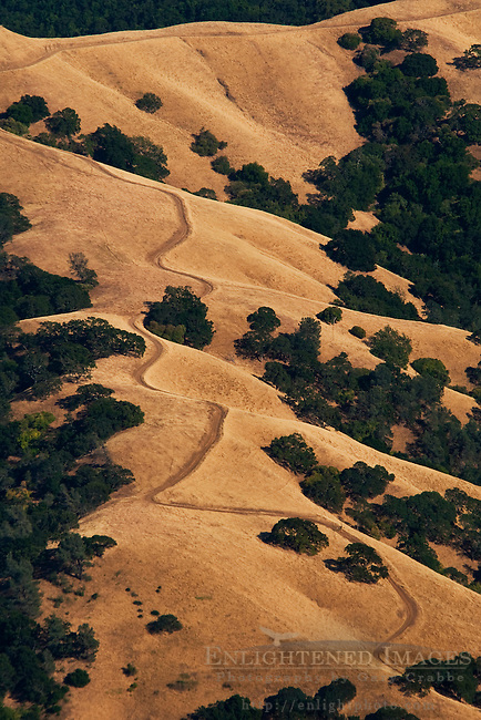 Oak and grass covered hills in summer along the slopes of Mount Diablo State Park, California