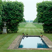 Hens strut around the edge of the pool which looks out past the gap in the beech trees to the fields beyond