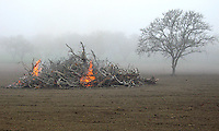 Fine art landscape of early morning ag burn, with orange flames consuming pile  of tree branches in foreground and silhouette of leafless tree to the right, while fog obscures a winter orchard of leafless fruit trees, near Santa Ynez Valley, central California Coast.