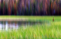 Blurred fisherman casting from marsh grass.