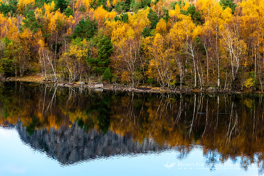 Imsvatnet, Sandnes, Norway. Colourful autumn colours, reflection and a swimming duck.