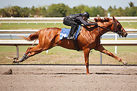 #34Fasig-Tipton Florida Sale,Under Tack Show. Palm Meadows Florida 03-23-2012 Arron Haggart/Eclipse Sportswire.