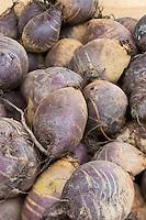 Europe/France/Pays de la Loire/44/Loire Atlantique/Assérac: Navets bio sur le marché des producteurs  //  France, Loire Atlantique, Asserac, Organic turnips market producers
