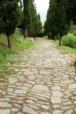 Via Santa Croce, ancient stone pathway lined with pines, Cortona, Italy