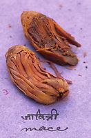 Asie/Inde/Maharashtra/Bombay : Les épices dans la cuisine indienne - Ecorce de la noix de muscade utilisée comme condiment