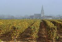 Europe/France/Pays de la Loire/49/Maine-et-Loire/AOC Saumur-Champigny: Le vignoble et l'église de Dampierre
