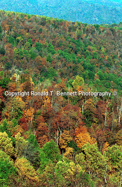 Skyline drive autumn leaves Commonwealth of Virginia, Fine Art Photography by Ron Bennett, Fine Art, Fine Art photography, Art Photography, Copyright RonBennettPhotography.com ©