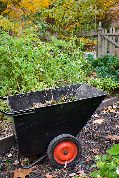 Garden cart wheelbarrow in autumn fall with debris, cleanup and garden chores, removing old organic matter and dead plant material