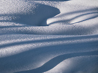 Late afternoon sun casts long shadows on new snow in Yellowstone National Park.