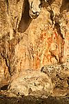 Prehistoric rock art on a cliff face near Mai Mai village, Namatota Strait, near Kaimana, Papua. Beautiful ornamented human form near top, boomerang-like figures, reverse hand print.